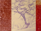 mountain pine, pastel blyant, tegning, drawing