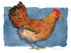 Chicken - henn - watercolour