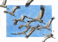 cranes, birds, fugle, akvarel, watercolour