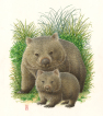 akvarel, pungdyr,  marsupial, watercolour, baby, cub, unge. mor, mother