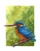 Common king fisher, watercolour, bird