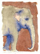 Asian, Indian elephant, watercolour